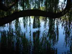 Willow Ripples