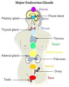 endocrine and chakras